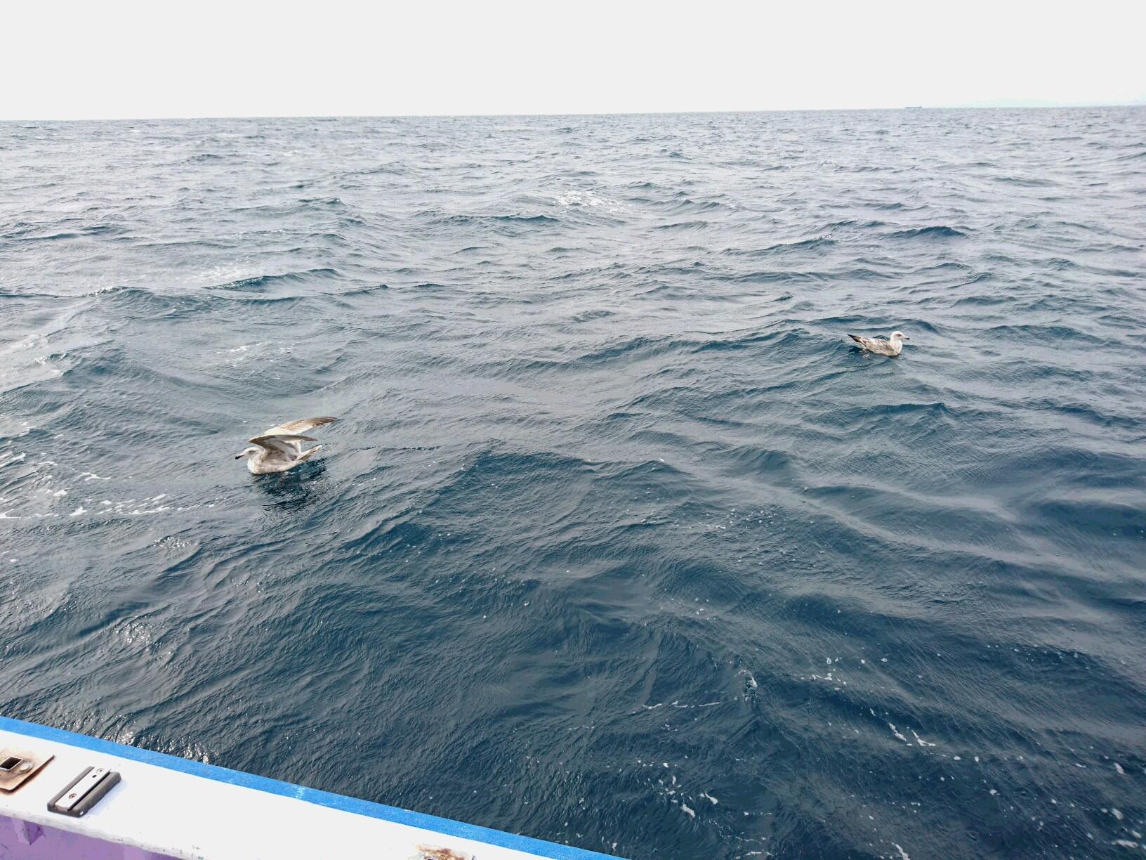 1月6日(水)釣果