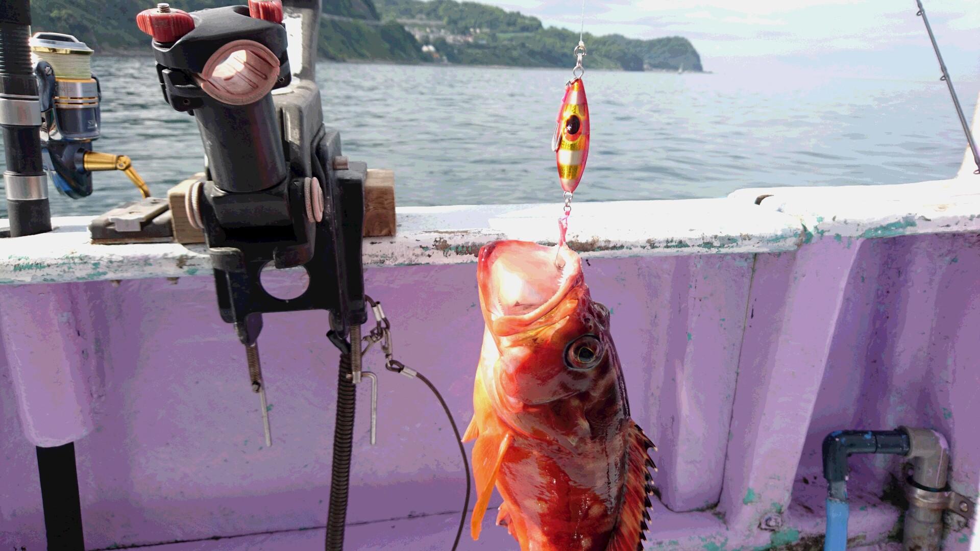 8月3日(水)釣果